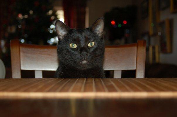 Irwin The Cat